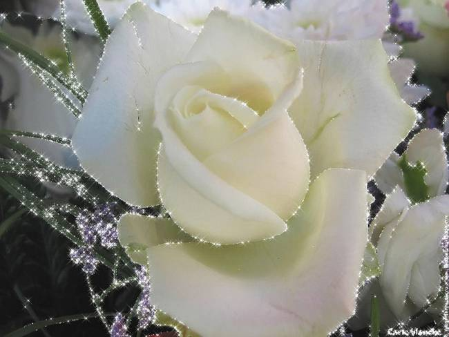 Анимация розы на рабочий стол